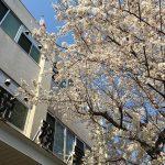 ・・税務署にも桜舞う・・#やるべきこと #カメラ散歩 #tokyophotographer #tokyophotography #japanphotography #myview #tokyolandmark #tokyo #japan #walking #nice #happy #fun #確定申告 #税は大事に使って