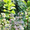 :・・うちのタイムが開花かわいいやつwith ミント・・・#ハーブのある暮らし #緑のある暮らし #ずっと緑の中にいたい #自然好き #草花好き #季節を感じる #spring #plans #color #green #nature #tokyophotographer #tokyophotography #japanphotography #myview #japan #walking #nice #happy #fun #カメラ散歩 #おうち時間